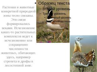 Растения и животные конкретной природной зоны тесно связаны. Эти связи форми