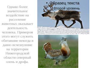 Однако более значительное воздействие на расселение животных оказывает деяте