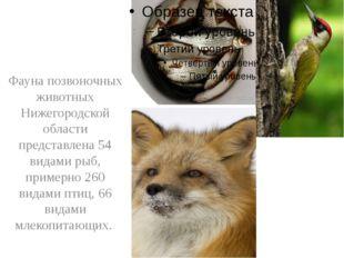Фауна позвоночных животных Нижегородской области представлена 54 видами рыб,
