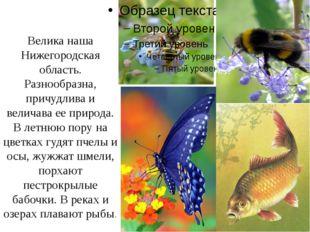 Велика наша Нижегородская область. Разнообразна, причудлива и величава ее пр