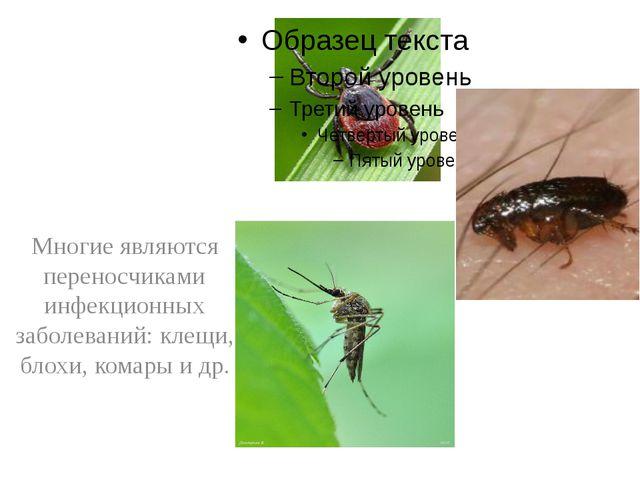 Многие являются переносчиками инфекционных заболеваний: клещи, блохи, комары...