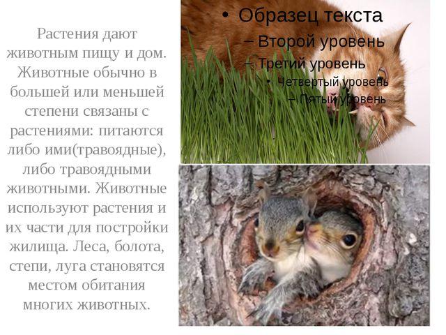 Растения дают животным пищу и дом. Животные обычно в большей или меньшей сте...