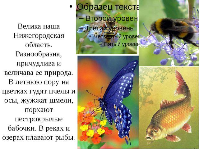 Велика наша Нижегородская область. Разнообразна, причудлива и величава ее пр...