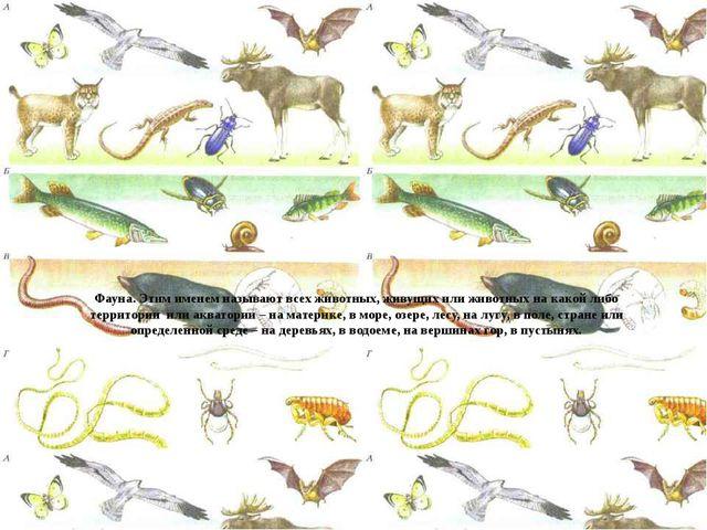 Фауна. Этим именем называют всех животных, живущих или животных на какой либ...