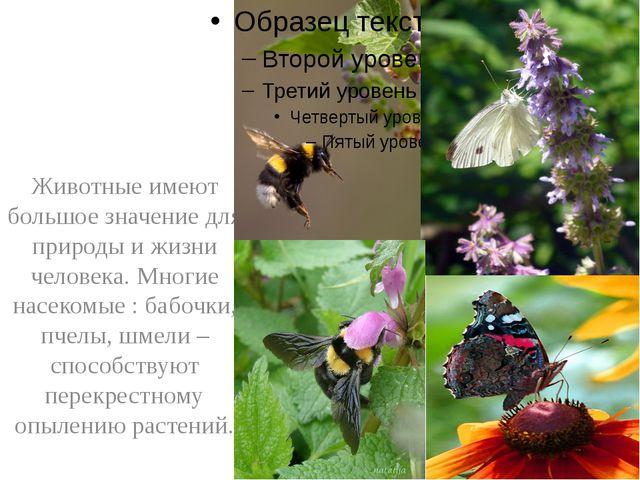 Животные имеют большое значение для природы и жизни человека. Многие насеком...