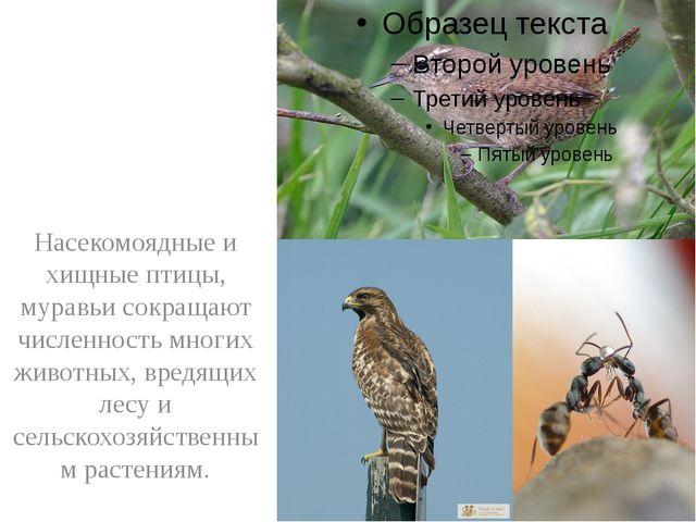 Насекомоядные и хищные птицы, муравьи сокращают численность многих животных,...