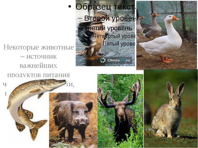 Некоторые животные – источник важнейших продуктов питания человека: рыбы, ут...