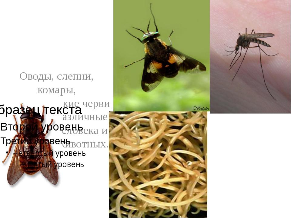 Оводы, слепни, комары, паразитические черви вызывают различные болезни у чел...