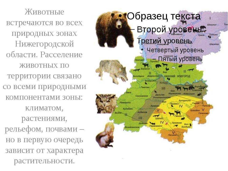 Животные встречаются во всех природных зонах Нижегородской области. Расселен...