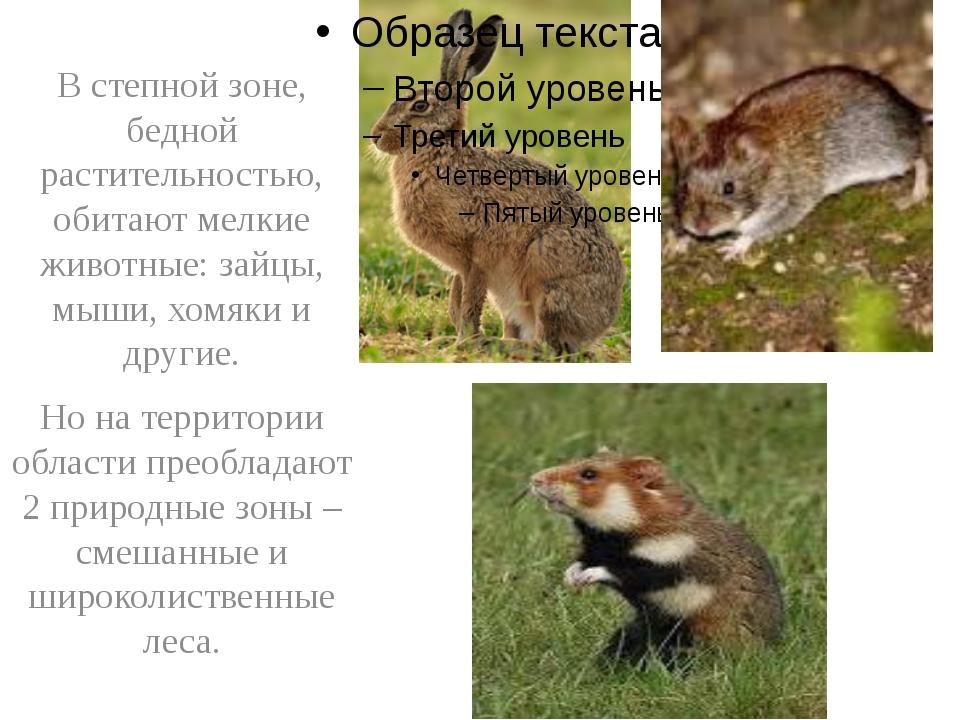 В степной зоне, бедной растительностью, обитают мелкие животные: зайцы, мыши...