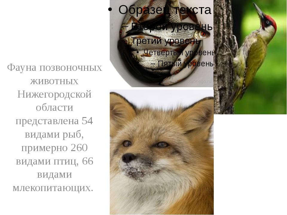 Фауна позвоночных животных Нижегородской области представлена 54 видами рыб,...