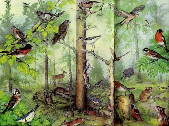 Птичьи песни