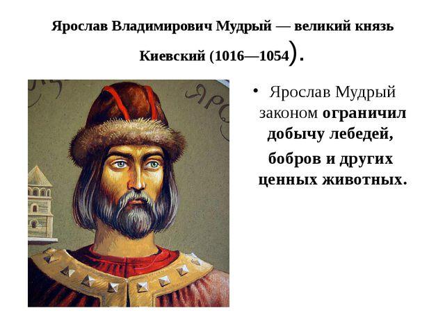 Ярослав Владимирович Мудрый — великий князь Киевский (1016—1054). Ярослав Му...