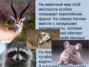 . На животный мир этой местности особое оказывает европейская фауна. На север