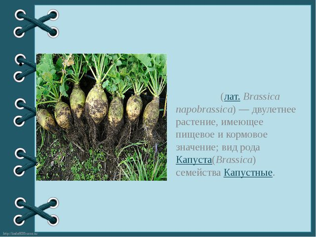 Брю́ква(лат.Brassica napobrassica)— двулетнее растение, имеющее пищевое и...