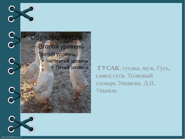 ГУСАК, гусака, муж. Гусь, самец гуся. Толковый словарь Ушакова. Д.Н. Ушаков....