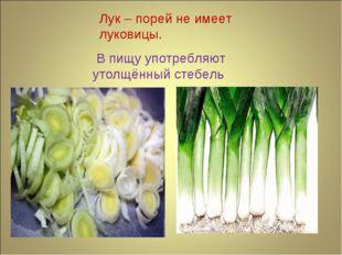 Лук – порей не имеет луковицы. В пищу употребляют утолщённый стебель