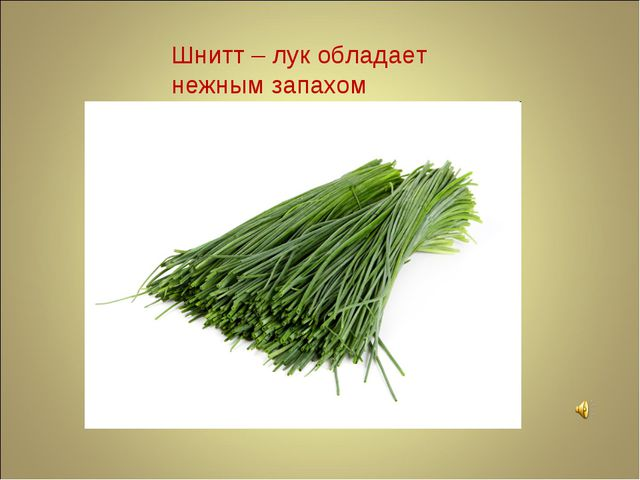 Шнитт – лук обладает нежным запахом