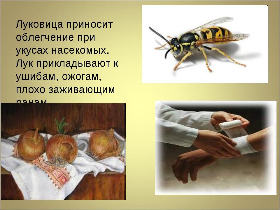 Луковица приносит облегчение при укусах насекомых. Лук прикладывают к ушибам,...
