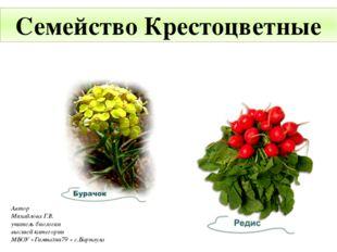 Семейство Крестоцветные Автор Михайлова Г.В. учитель биологии высшей категори