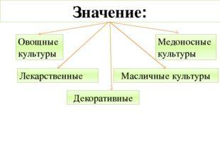 Овощные культуры Лекарственные Масличные культуры Медоносные культуры Значени