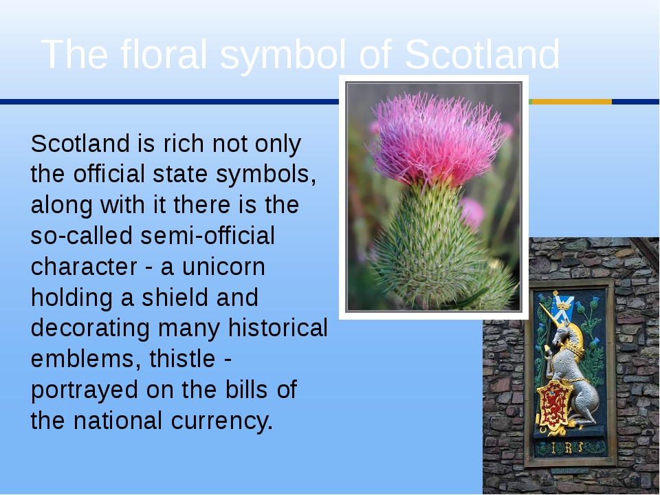 Scotland is rich not only the official state symbols, along with it there is...