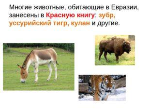 Многие животные, обитающие в Евразии, занесены в Красную книгу: зубр, уссурий