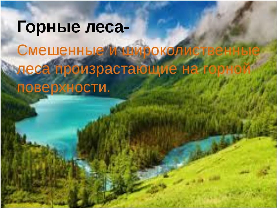 Горные леса- Смешенные и широколиственные леса произрастающие на горной повер...