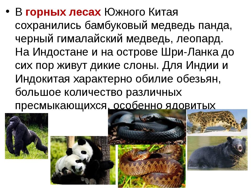 В горных лесах Южного Китая сохранились бамбуковый медведь панда, черный гима...
