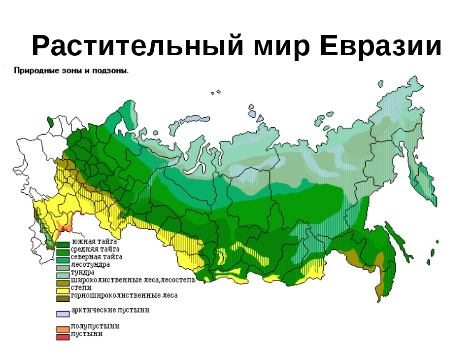 Растительный мир Евразии