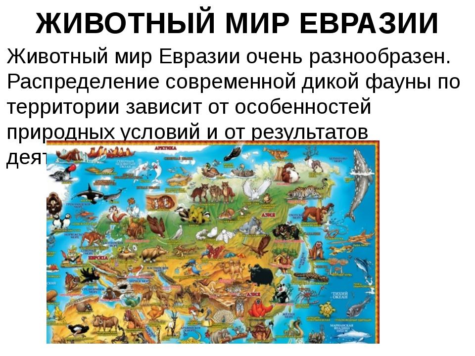 ЖИВОТНЫЙ МИР ЕВРАЗИИ Животный мир Евразии очень разнообразен. Распределение с...