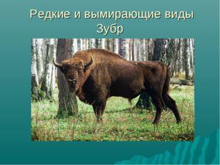 Редкие и вымирающие виды Зубр