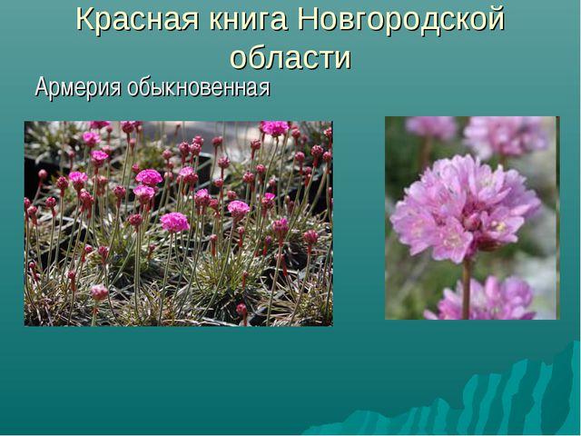 Красная книга Новгородской области Армерия обыкновенная