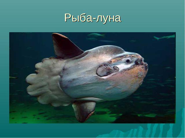 Рыба-луна