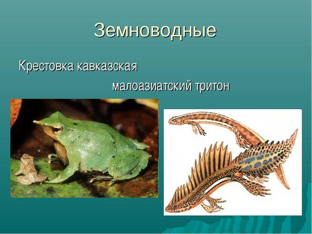 Земноводные Крестовка кавказская малоазиатский тритон