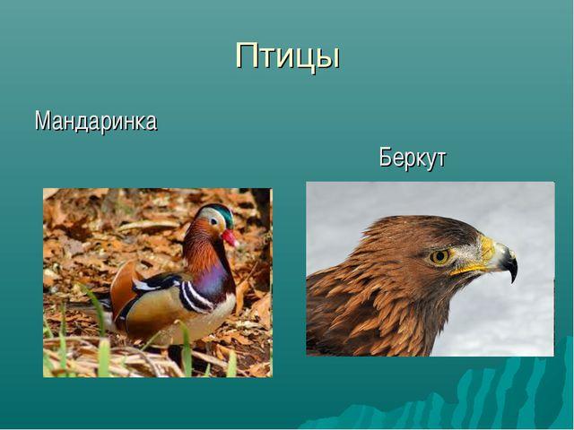 Птицы Мандаринка Беркут