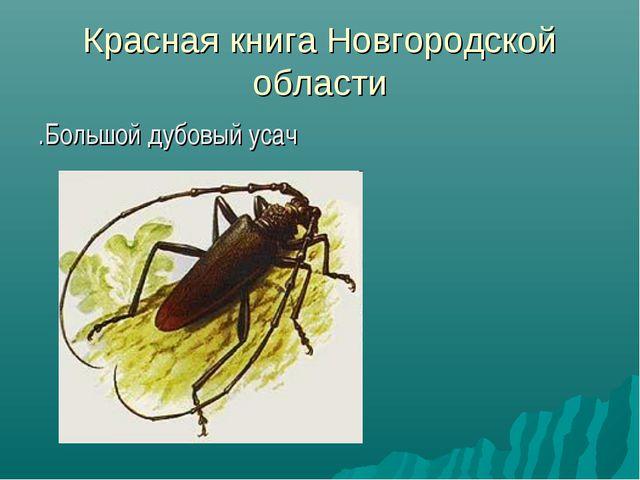 Красная книга Новгородской области .Большой дубовый усач