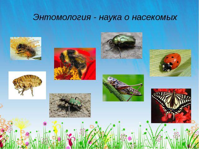 Энтомология - наука о насекомых