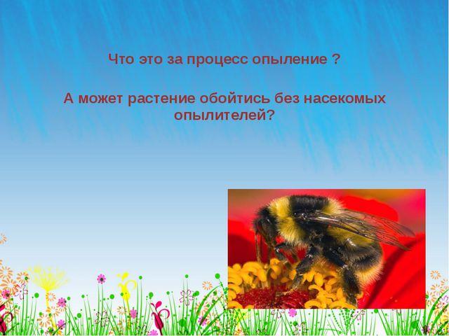 Что это за процесс опыление ? А может растение обойтись без насекомых опылите...