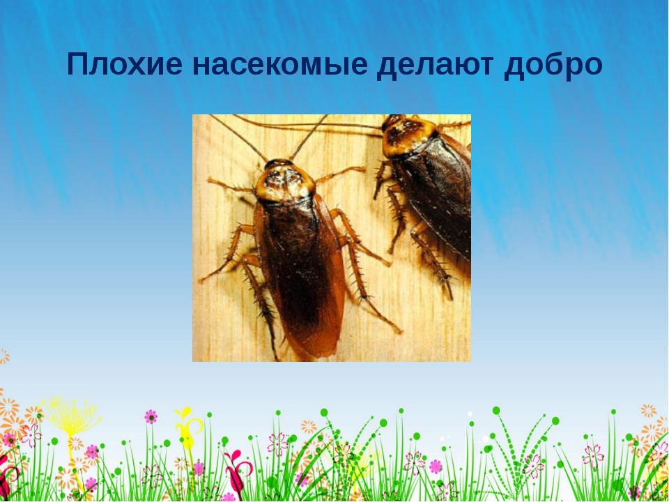 Плохие насекомые делают добро