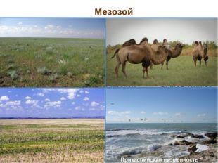 Мезозой Прикаспийская низменность Эпоха складчатости Эра Основные геологичес