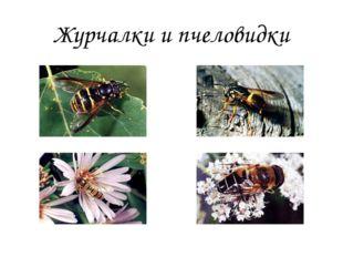 Журчалки и пчеловидки