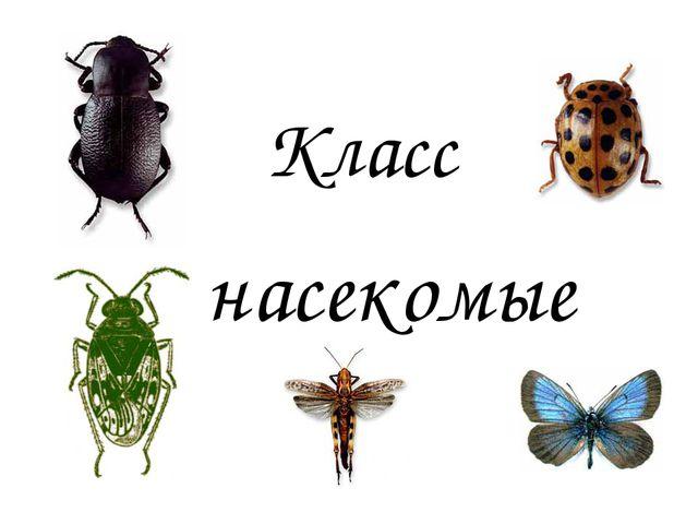 Класс насекомые