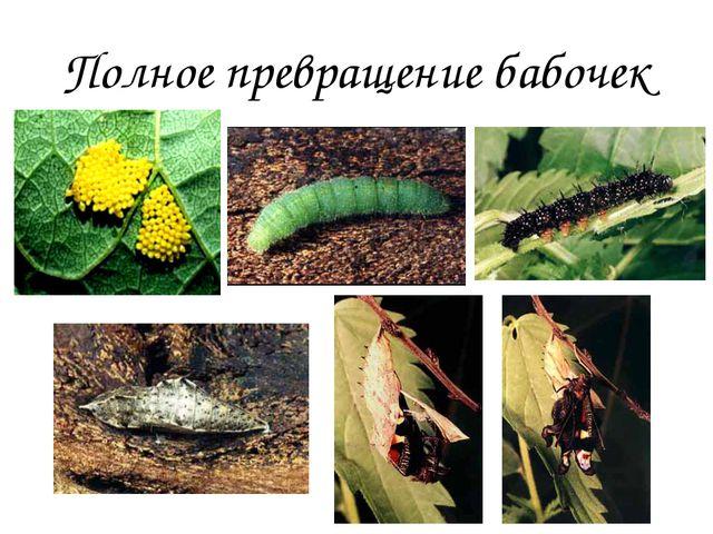 Полное превращение бабочек