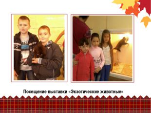 Посещение выставки «Экзотические животные»
