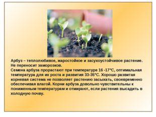 Арбуз – теплолюбивое, жаростойкое и засухоустойчивое растение. Не переносит з