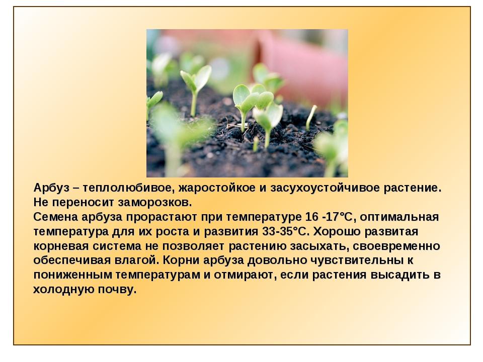 Арбуз – теплолюбивое, жаростойкое и засухоустойчивое растение. Не переносит з...