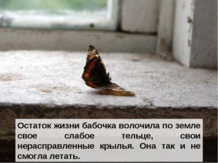 Остаток жизни бабочка волочила по земле свое слабое тельце, свои нерасправлен