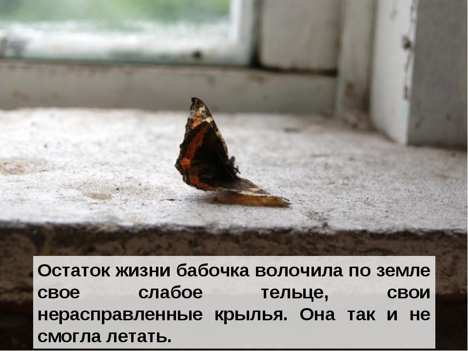 Остаток жизни бабочка волочила по земле свое слабое тельце, свои нерасправлен...