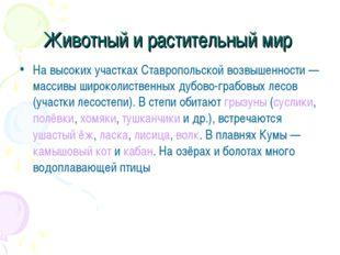 Животный и растительный мир На высоких участках Ставропольской возвышенности